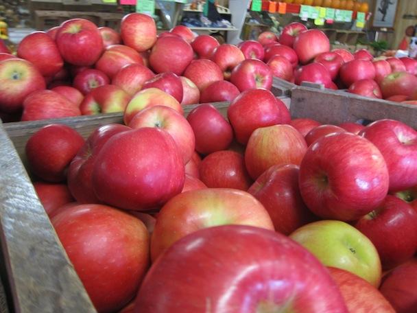 24. Nova Scotia Gravenstein Apple