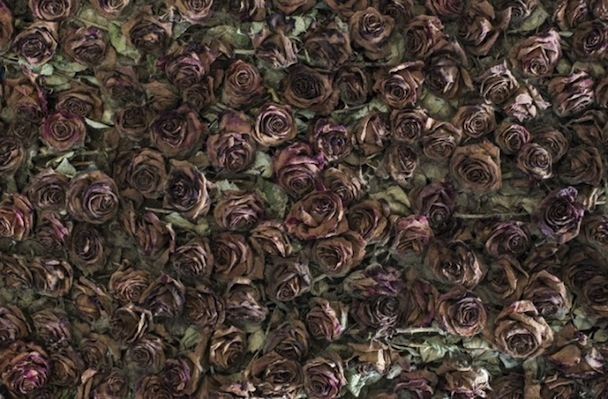 Life-and-Death-of-10-000-Roses2-640x420