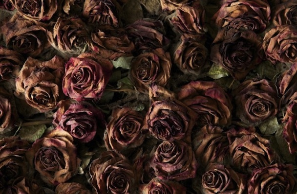 Life-and-Death-of-10-000-Roses4-640x420