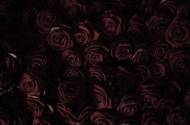 Life-and-Death-of-10-000-Roses5-640x420