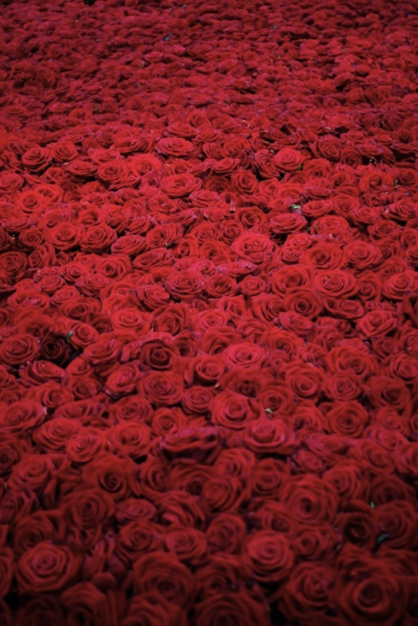 Life-and-Death-of-10-000-Roses7-640x959