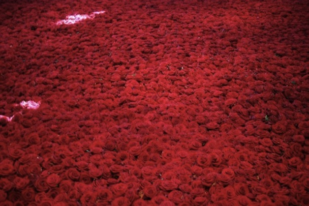 Life-and-Death-of-10-000-Roses8-640x426