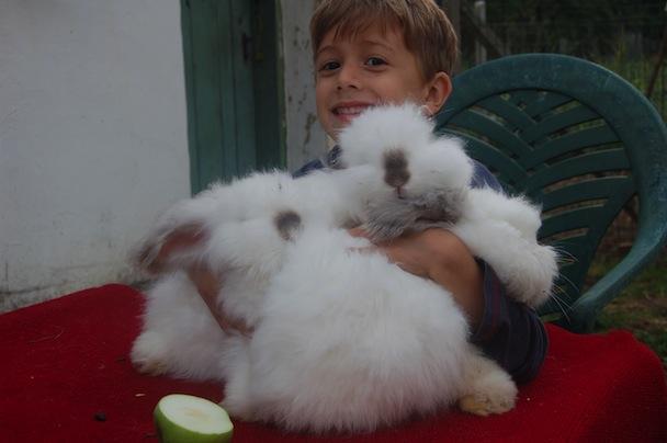 Rabbits 002