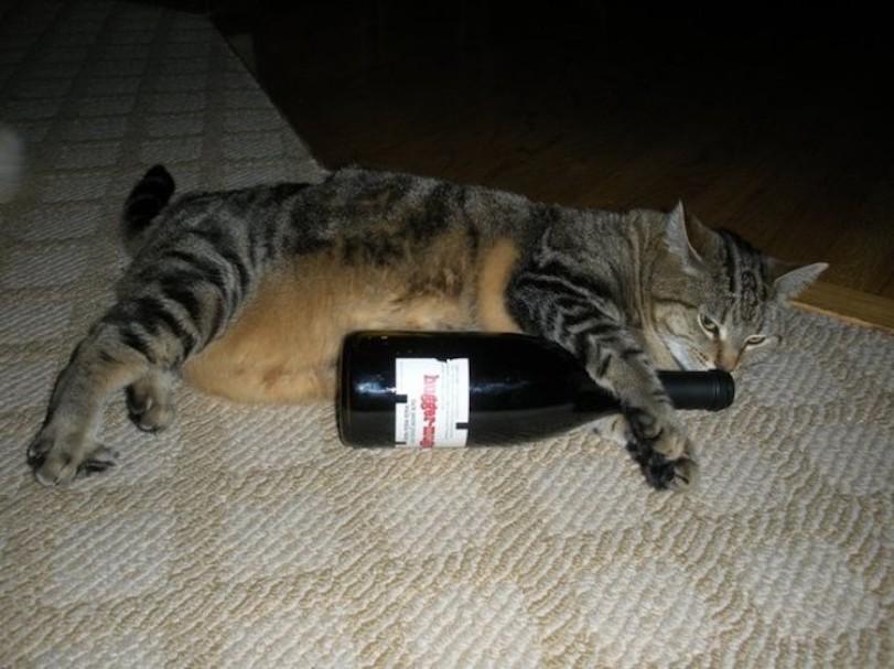 cat_wine-650x487