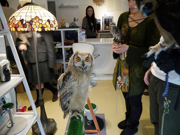 Owl-Cafe-4-650x486