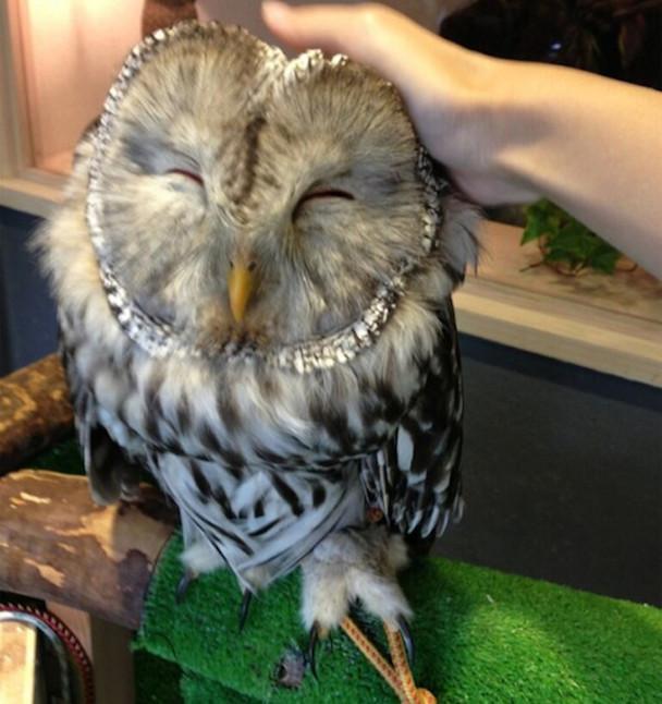 Owl-Cafe-5-650x691