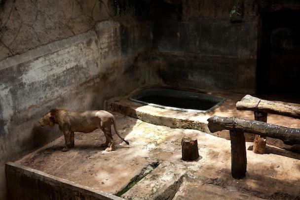 Captive 07