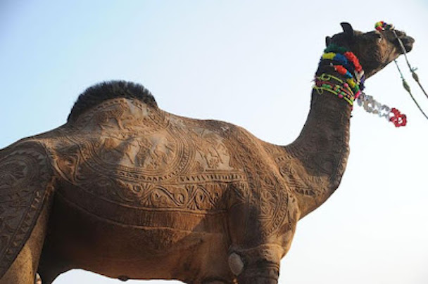 camel_hair_art_picture_05