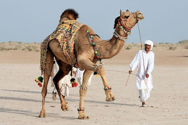 camel_hair_art_picture_11