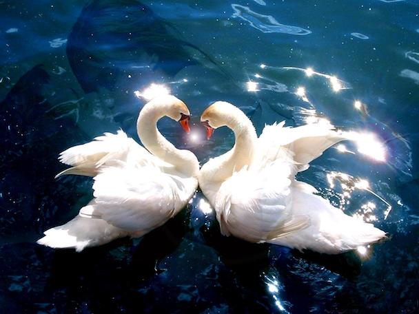 animals-pictures-falling-in-love1