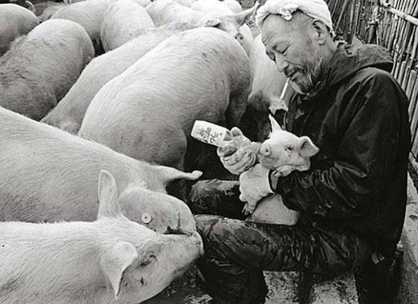 pig-guy-3