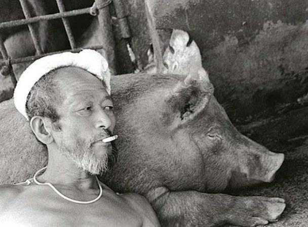 pig-guy-4