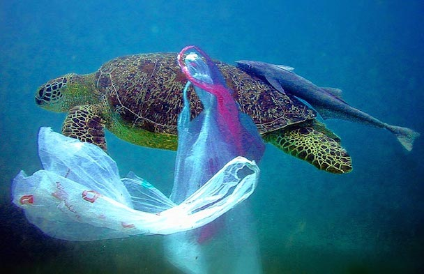 Plastic-Bags-Ocean