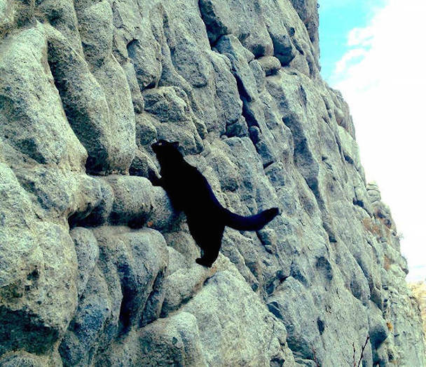 millie-climbing-cat-craig-armstrong-101