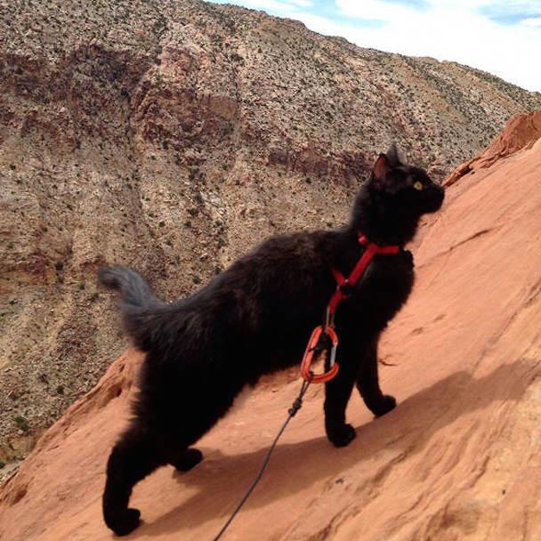 millie-climbing-cat-craig-armstrong-141