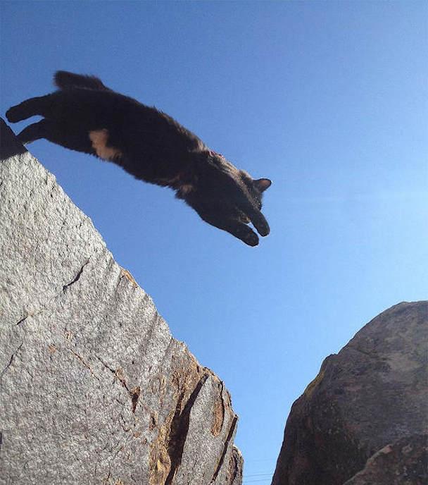 millie-climbing-cat-craig-armstrong-71