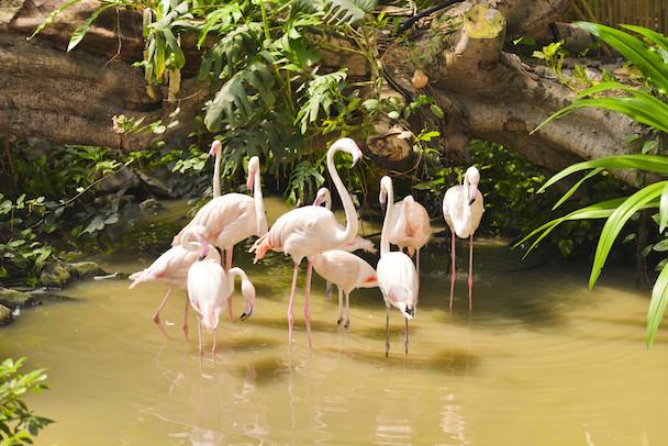 ti-flamingos7-rgb-91