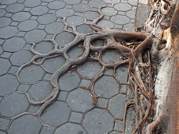 tree-roots-concrete-pavement-18