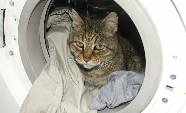 cat-washing-machine.jpg.662x0_q100_crop-scale