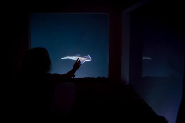 manta-resort-underwater-room-7