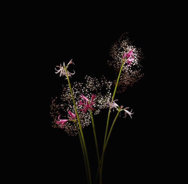 flowerworks-2