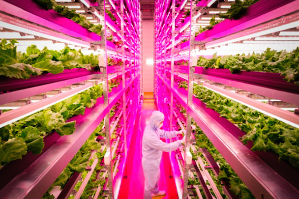 2indoor-farms_