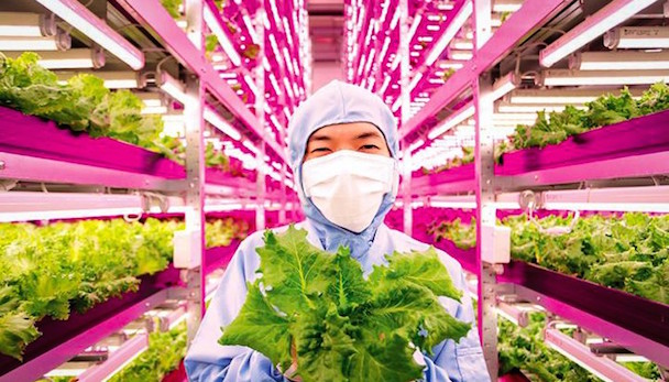 indoor-farms_Altnernative-News-700x400