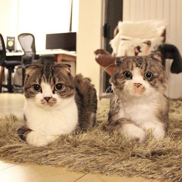 pet-copy-custom-plush-toys-cuddle-clones-10-605x605