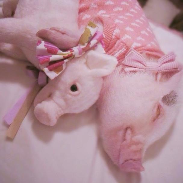 pet-copy-custom-plush-toys-cuddle-clones-18-605x605