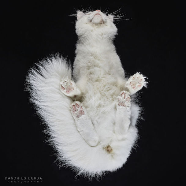 25-photos-of-cats-taken-from-underneath-23__880