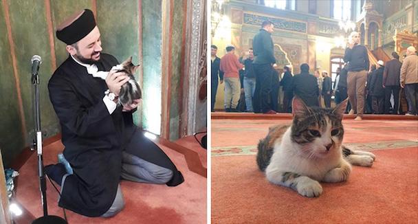 stray-cats-mosque-aziz-mahmud-hudayi-mustafa-efe-istanbul-turkey-11