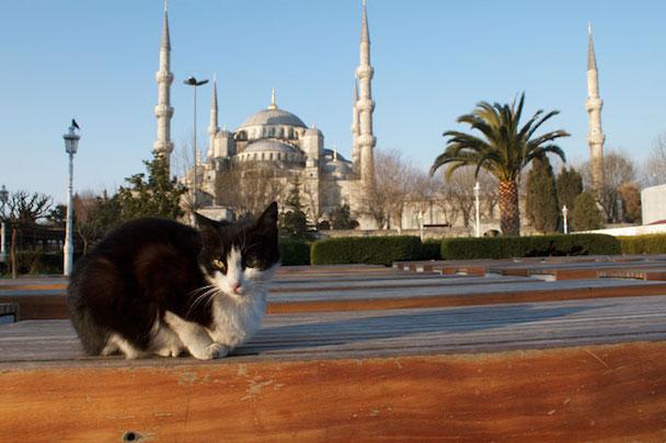 stray-cats-mosque-aziz-mahmud-hudayi-mustafa-efe-istanbul-turkey-111
