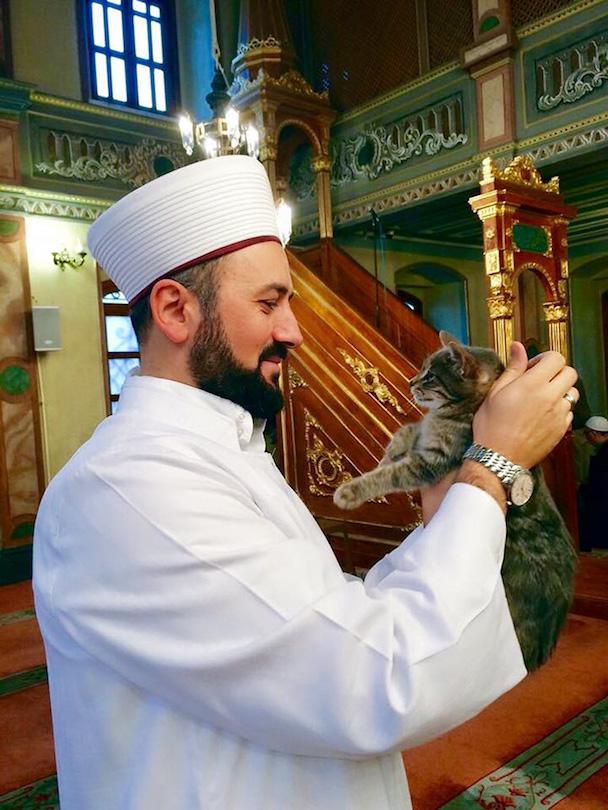 stray-cats-mosque-aziz-mahmud-hudayi-mustafa-efe-istanbul-turkey-3