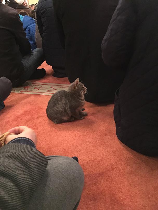 stray-cats-mosque-aziz-mahmud-hudayi-mustafa-efe-istanbul-turkey-4