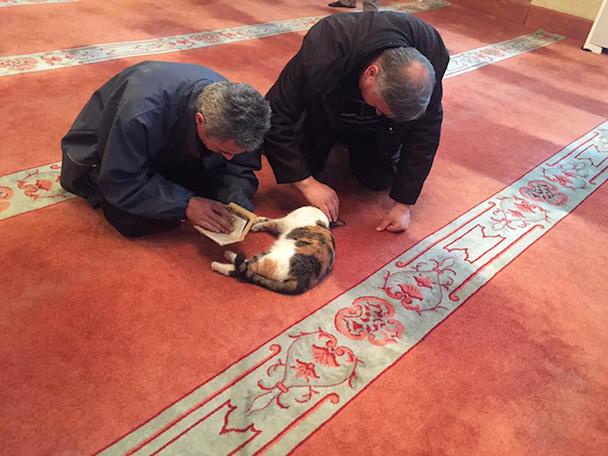 stray-cats-mosque-aziz-mahmud-hudayi-mustafa-efe-istanbul-turkey-5